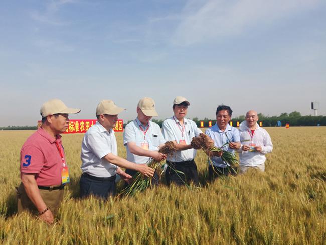 高标准农田土壤改良新技术取得重要进展