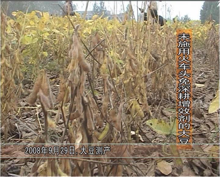 2008年,睢阳区冯桥乡万博manbetx官网电脑促根剂在大豆试验对比