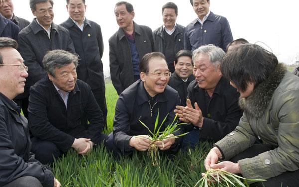 小麦科学家郭天财向温总理汇报工作