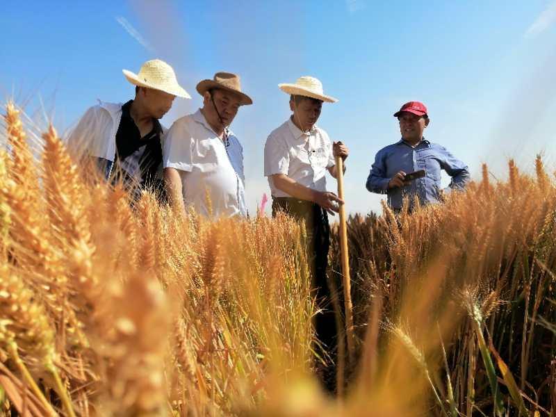 <font color='#006600'>中央铁令:农业要大变天了!明确消息已发布,全国立即执行,再不改变就晚了</font>